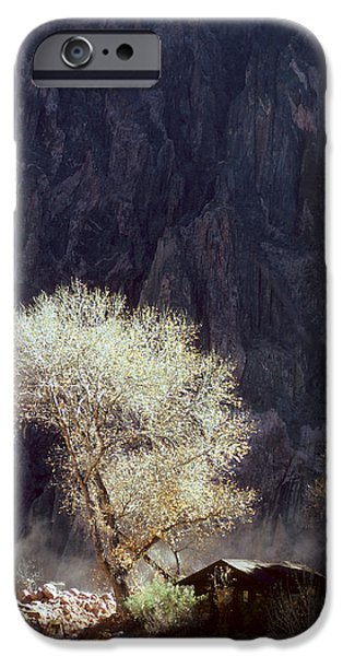 Grand Canyon iPhone Cases - Grand Canyon Reflected Tree iPhone Case by Dave Dilli
