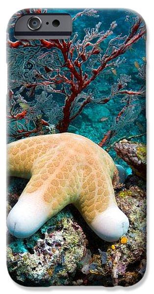 Granulated Seastar iPhone Case by Georgette Douwma