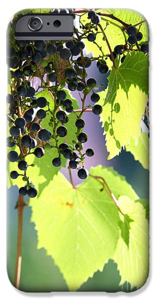 grapes and leaves iPhone Case by Michal Boubin