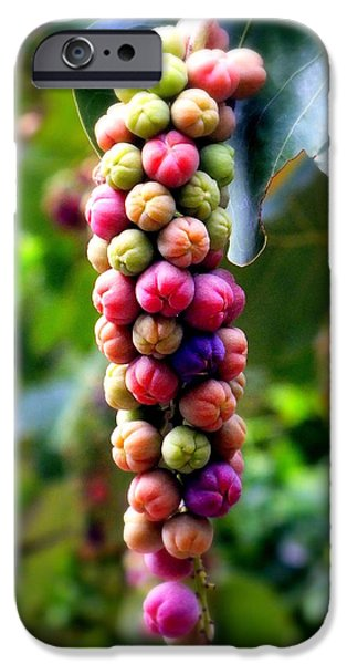 Wine Reflection Art iPhone Cases - Grapes By the Sea iPhone Case by Karen Wiles
