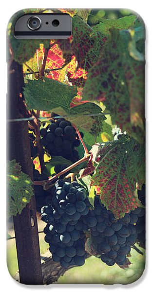 Grape Leaf iPhone Cases - Grapes iPhone Case by Laurie Search
