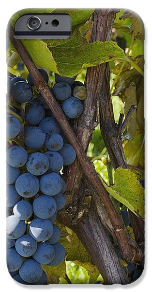 Grapes On A Vine Sutton Junction Quebec iPhone Case by David Chapman
