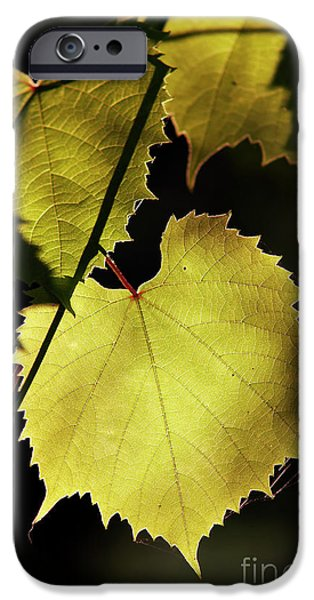 grapevine in the back lighting iPhone Case by Michal Boubin