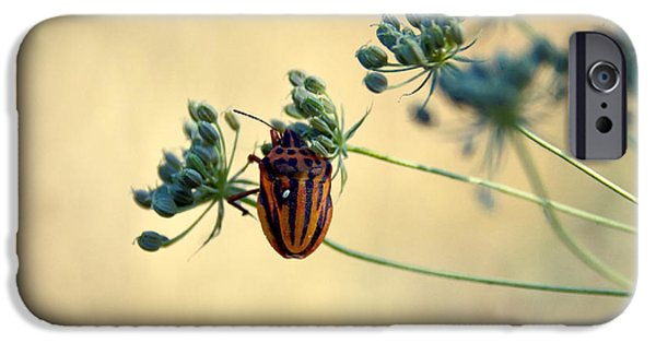 Animals Photographs iPhone Cases - Graphosoma lineatum iPhone Case by Stylianos Kleanthous