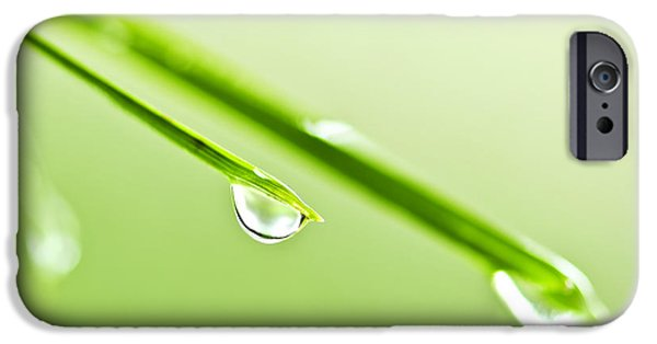 Young Photographs iPhone Cases - Grass blades with water drops iPhone Case by Elena Elisseeva