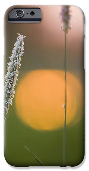 Grass Blooming iPhone Case by Heiko Koehrer-Wagner