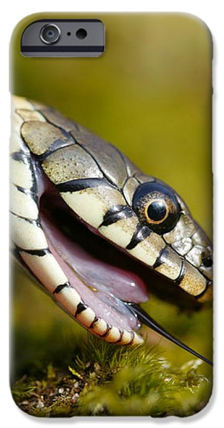 Grass Snake Feigning Death iPhone Case by Andy Harmer