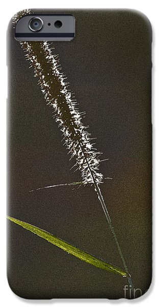 Grass Spikelet iPhone Case by Heiko Koehrer-Wagner