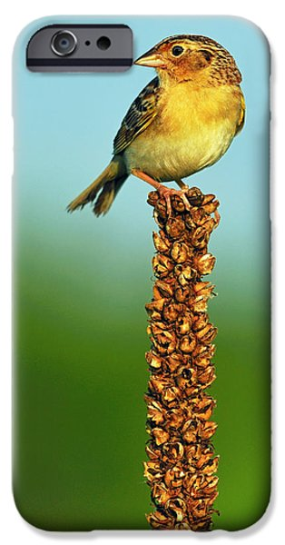 Mullen iPhone Cases - Grasshopper Sparrow iPhone Case by Tony Beck