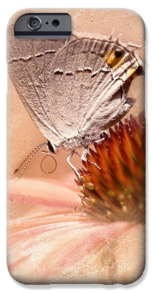 Gray Hairstreak Butterfly iPhone Case by Betty LaRue