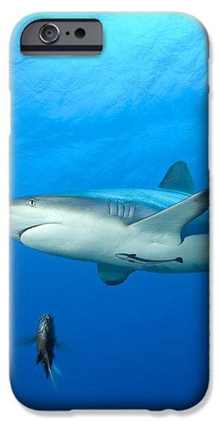 Gray Reef Shark. Papua New Guinea iPhone Case by Steve Jones