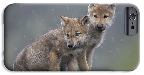 Animalsandearth iPhone Cases - Gray Wolf Canis Lupus Pups In Light iPhone Case by Tim Fitzharris