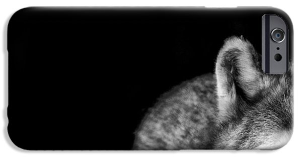 Wolf Photo iPhone Cases - Gray Wolf Stare Photo Ive Got My Eye on You iPhone Case by Stephanie McDowell