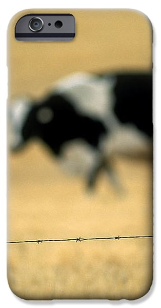 Grazing Cow, Alberta, Canada iPhone Case by Ron Watts