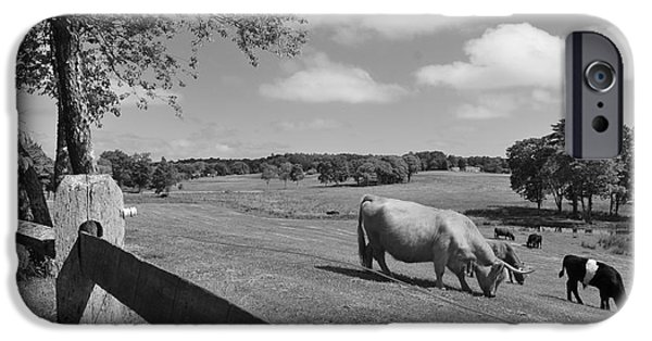 Catherine White Photographs iPhone Cases - Grazing the Day Away iPhone Case by Catherine Reusch  Daley