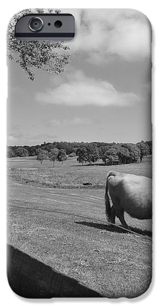 Grazing the Day Away iPhone Case by Catherine Reusch  Daley