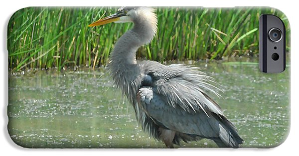 Water In Caves iPhone Cases - Great Blue Heron iPhone Case by Paul Ward