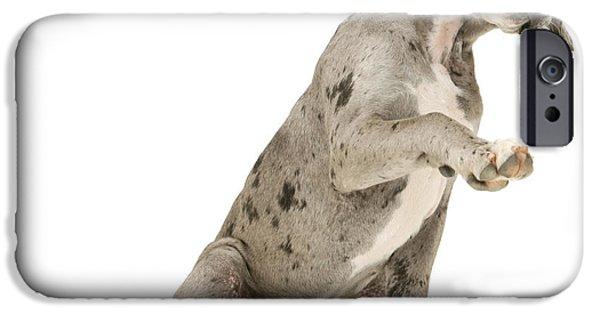 Great Dane Puppy iPhone Cases - Great Dane Puppy iPhone Case by Jane Burton