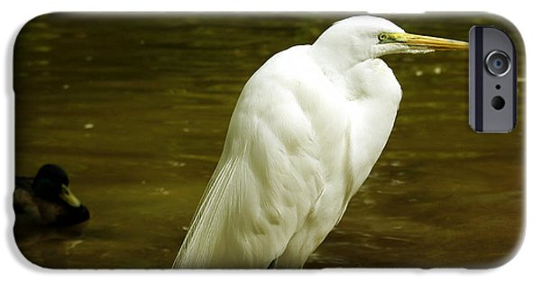 Water Image iPhone Cases - Great Egret 2 iPhone Case by Cheryl Young