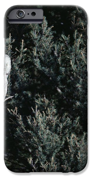 Great Gray Owl Strix Nebulosa In Blonde iPhone Case by Michael Quinton