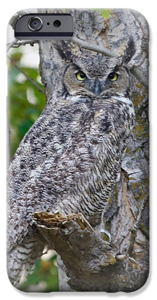 Great Horned Owl II iPhone Case by Athena Mckinzie