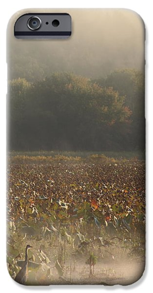 Concord Massachusetts iPhone Cases - Great Meadows National Wildlife Refuge Blue Heron Fog iPhone Case by John Burk
