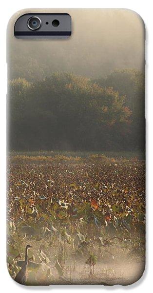 Great Meadows National Wildlife Refuge Blue Heron Fog iPhone Case by John Burk
