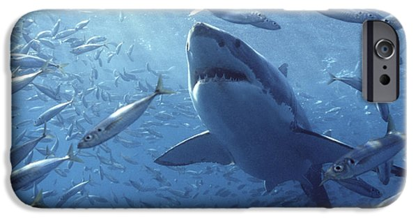 Animalsandearth iPhone Cases - Great White Shark Carcharodon iPhone Case by Mike Parry