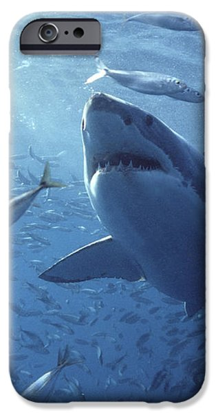 Great White Shark Carcharodon iPhone Case by Mike Parry