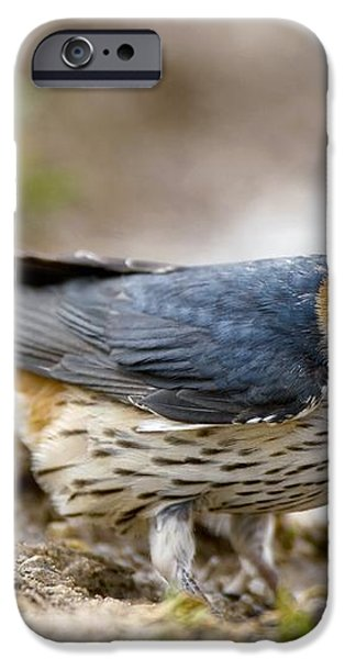 Greater Striped Swallow iPhone Case by Peter Chadwick