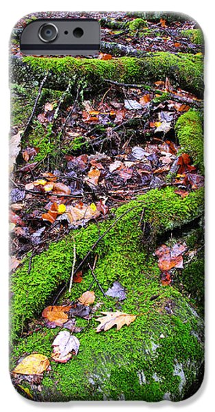 Green and Serene iPhone Case by Thomas R Fletcher