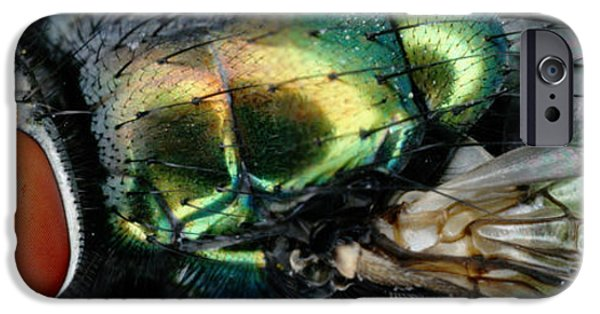 Animals Photographs iPhone Cases - Green Blow Fly iPhone Case by Ted Kinsman