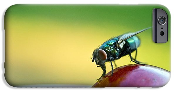 Eating Entomology iPhone Cases - Green Bottle Fly On A Grape iPhone Case by David Nunuk