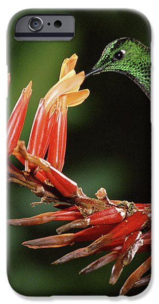 Green-crowned Brilliant Heliodoxa iPhone Case by Michael & Patricia Fogden