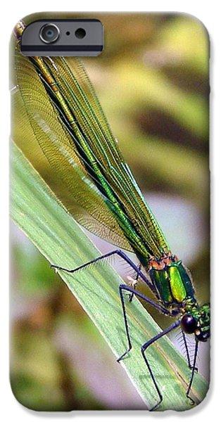Green Damselfly iPhone Case by Ramona Johnston