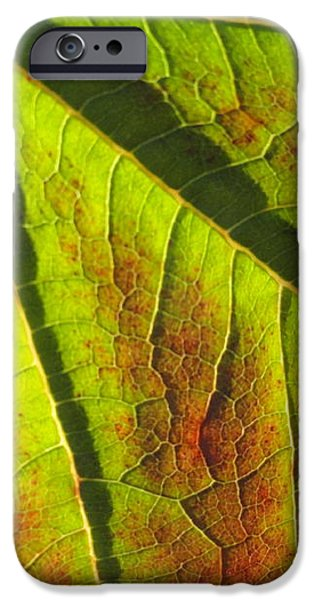 green days past iPhone Case by Trish Hale