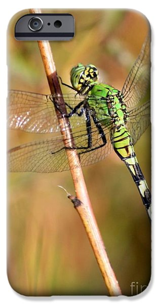 Green Dragonfly Closeup iPhone Case by Carol Groenen