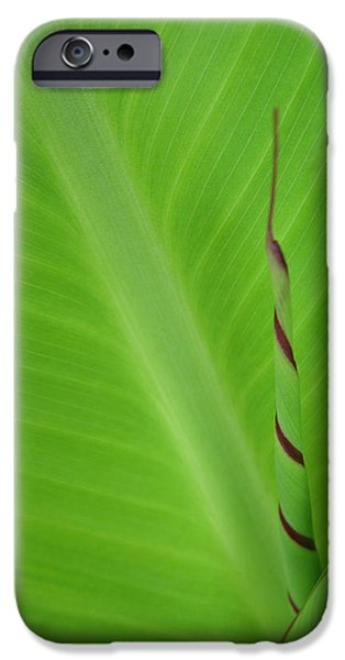 Green Leaf with Spiral New Growth iPhone Case by Nikki Marie Smith