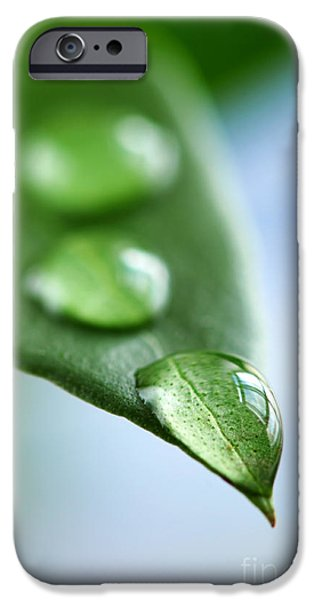Leaves iPhone Cases - Green leaf with water drops iPhone Case by Elena Elisseeva