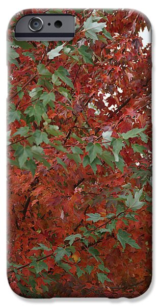Counterpoint iPhone Cases - Green Leaves Against Red Leaves iPhone Case by Mick Anderson