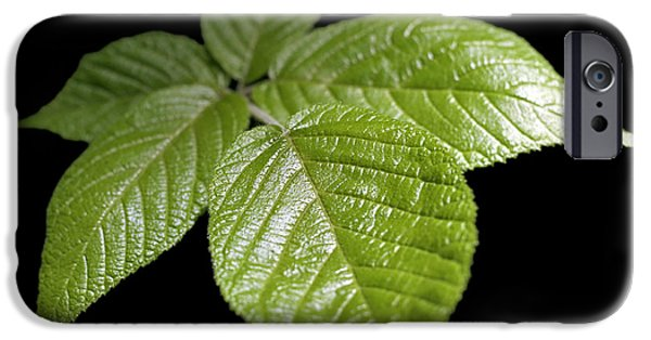For Healthcare iPhone Cases - Green Leaves iPhone Case by Tony Cordoza