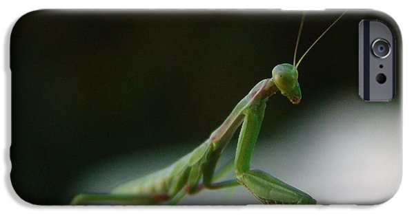 Mantises iPhone Cases - Green Mantis iPhone Case by Alessandro Della Pietra
