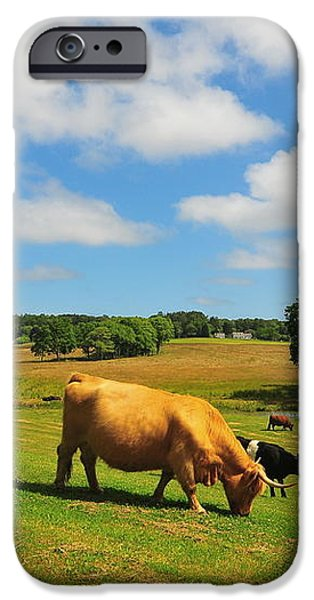 Green Pasture iPhone Case by Catherine Reusch  Daley