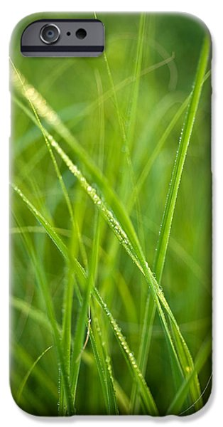 Prairie iPhone Cases - Green Prairie Grass iPhone Case by Steve Gadomski