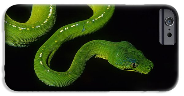 Serpent iPhone Cases - Green Python iPhone Case by Bruce J Robinson