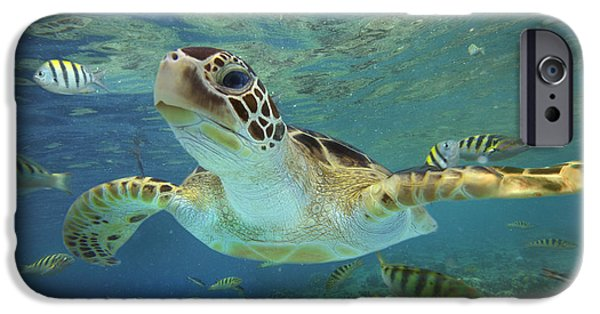 Animal Photographs iPhone Cases - Green Sea Turtle Chelonia Mydas iPhone Case by Tim Fitzharris