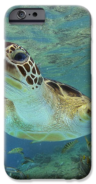 Green Sea Turtle Chelonia Mydas iPhone Case by Tim Fitzharris