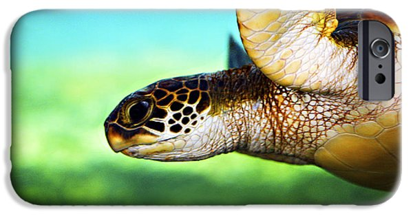 Animal Photographs iPhone Cases - Green Sea Turtle iPhone Case by Marilyn Hunt