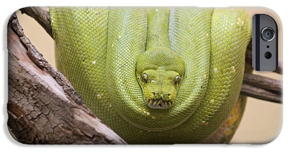 Burmese Python iPhone Cases - Green Tree Python iPhone Case by Suzanne Gaff
