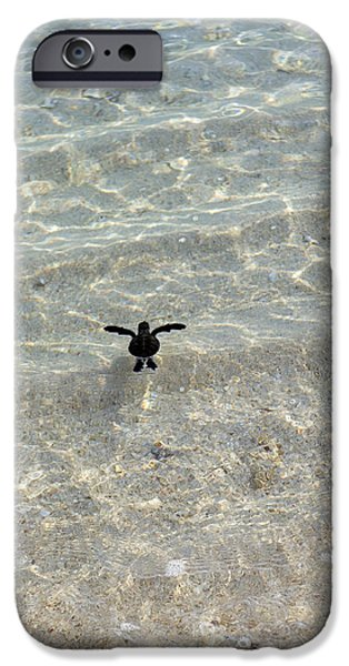 The Hatchery iPhone Cases - Green Turtle Hatchling iPhone Case by Matthew Oldfield